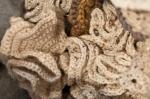 dixies crocheted braincoral