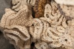 dixies crocheted brain coral